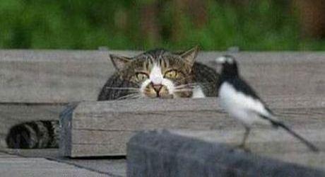 Katze jagt Vogel