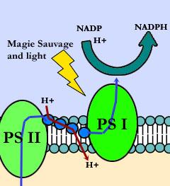 NADP creation